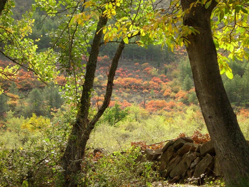 Retazo de otoño